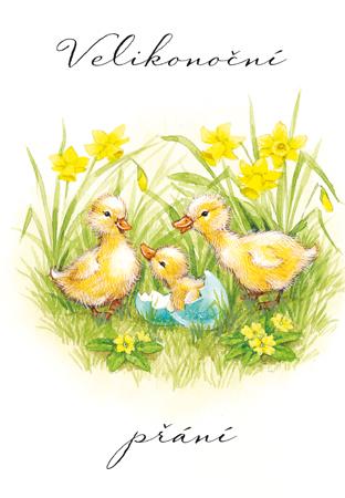 obrázky přání k velikonocům Narcisy   přání k Velikonocům obrázky přání k velikonocům