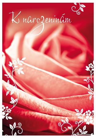 růže k narozeninám Růže k narozeninám růže k narozeninám